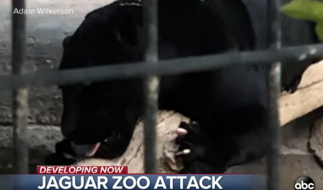 selfie με τζάγκουαρ Woman attacked by jaguar at an Arizona zoo