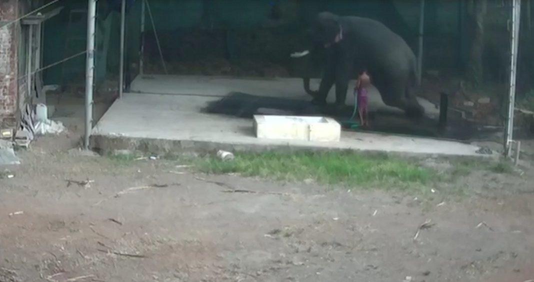 Εξαγριωμένος ελέφαντας σκοτώνει