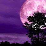 Ρόζ φεγγάρι – «Μοίρα άσχημη και δολοφονική»: «Να προσέχει ο Τσίπρας
