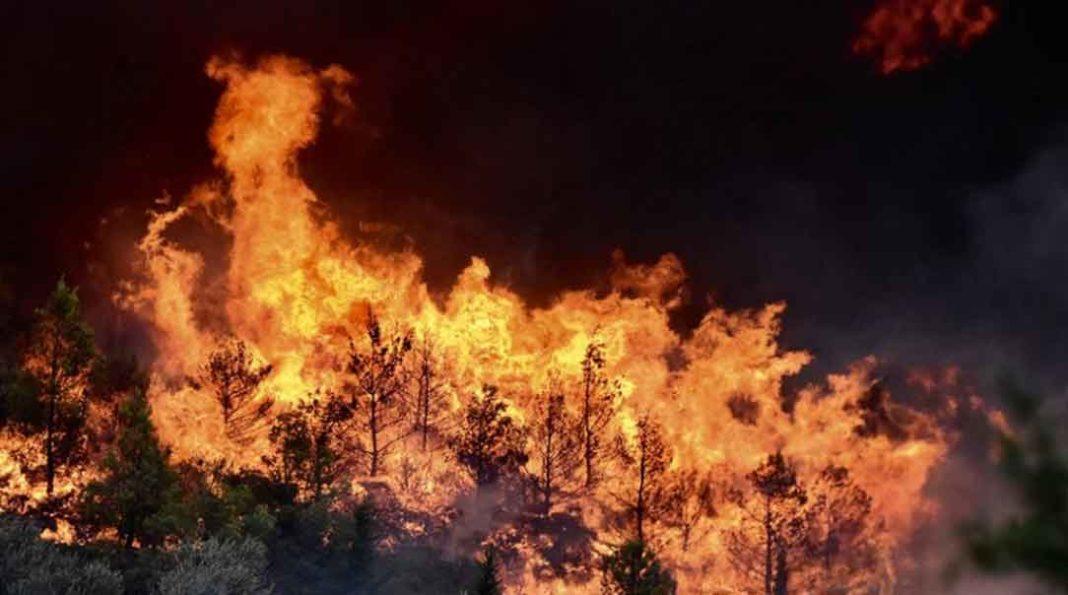 Μεγάλη κινητοποίηση της Πυροσβεστικής για φωτιά στην Εύβοια