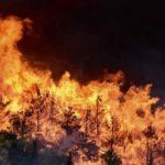 Συναγερμός  στην Πυροσβεστική - Μεγάλη φωτιά στη Εύβοια