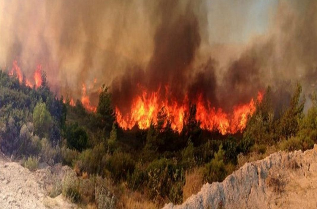 Σε πλήρη εξέλιξη βρίσκεται η φωτιά στην Εύβοια, η οποία όπως έγινε γνωστό καίει συμπαγές πευκοδάσος Natura, που είναι καταφύγιο άγριας