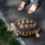 Πρόστιμο σε 60χρονη που έβγαλε βόλτα τη… χελώνα της!