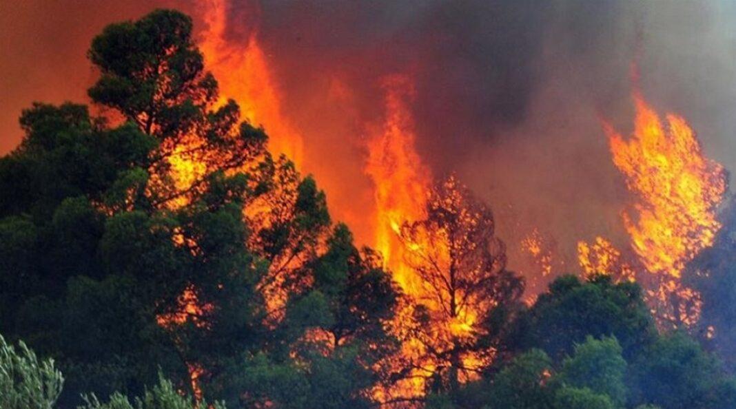 Εξήντα δύο φωτιές σε δασικές εκτάσεις εκδηλώθηκαν, σύμφωνα με την Πυροσβεστική, σε όλη την Ελλάδα, από τις 19:00 το απόγευμα