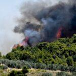 Συναγερμός στα Βίλια: Νέα πυρκαγιά στην περιοχή Κάζα – Μεγάλη κινητοποίηση της πυροσβεστικής